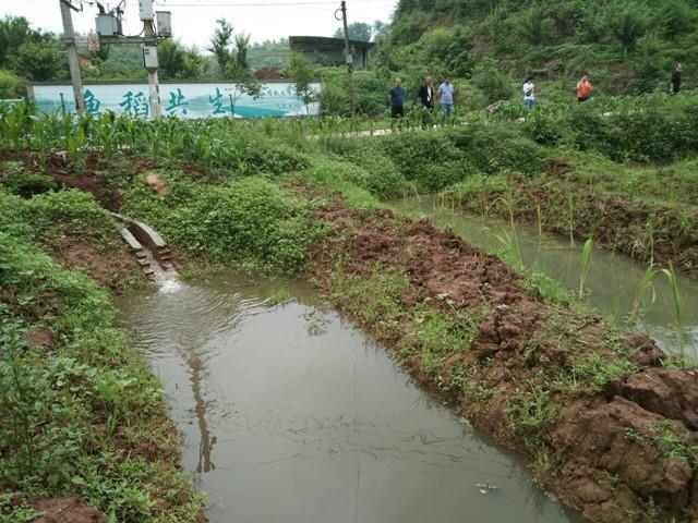 池塘水通过暴气沟后进入生态沟