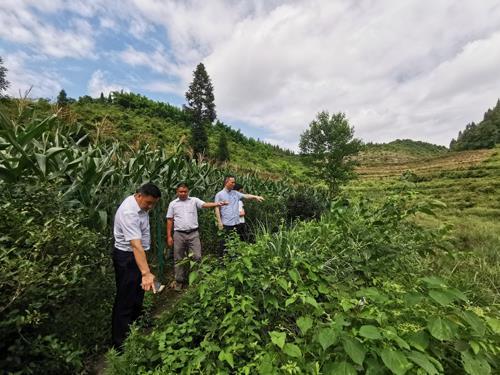 酉阳县野生金荞麦原生境保护区