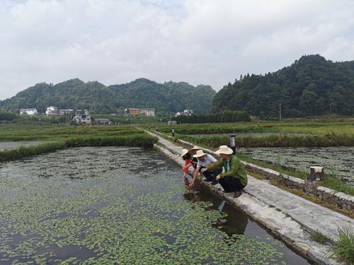 石柱县野生莼菜原生境保护区