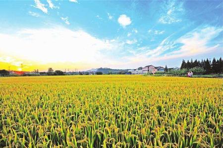 """国务院办公厅印发《关于防止耕地""""非粮化""""稳定粮食生产的意见》"""